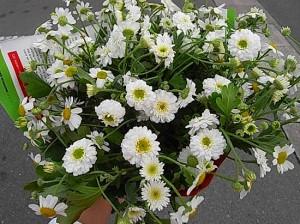 オランダの花やさんに行ってきました。